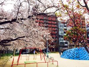さくら_公園